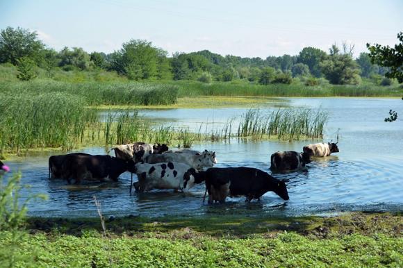 WWF възражда изоставени села по поречието на Дунав
