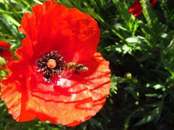 ЕК отпуска още 120 милиона евро за пчеларите