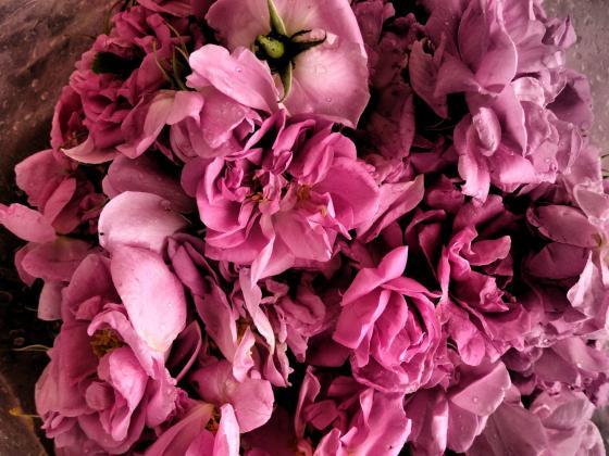 Ралчева: Слаба година за розите – заради дъждовете сме на една трета от 2018 г.