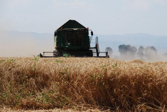 Русалов: От 12 години не сме имали толкова тежка година при зърното