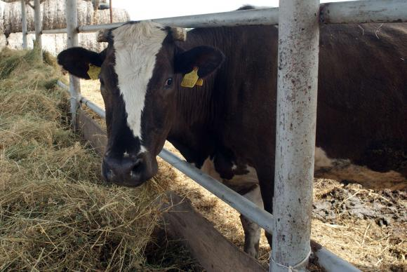 Млякото за директни продажби от фермите вече е наполовина на изкупуваното от мандрите