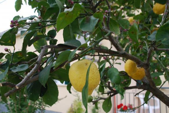 Сушата настъпва и през 2070 г. край Струма ще растат мандарини и лимони