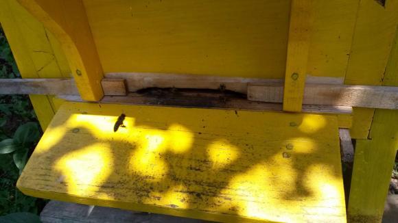 Работа на пчеларя през юли