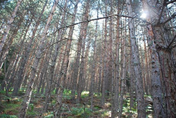 Френски оперативни групи с иновации в защита на горите
