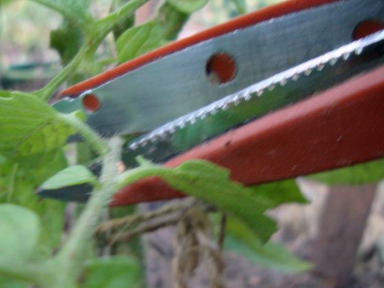 Травмирайте доматите и те ще се отблагодарят