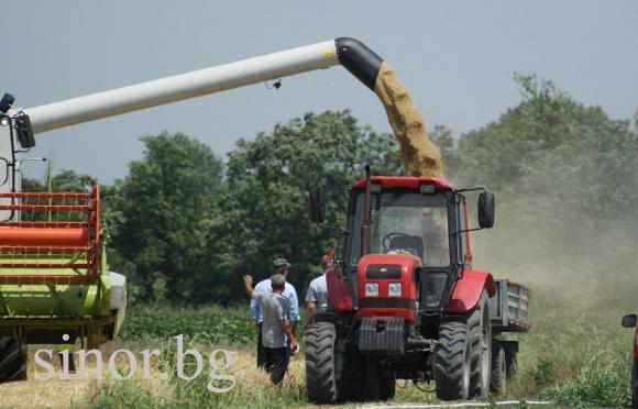 Хлебна пшеница от място се предлага на 340 лв/тон
