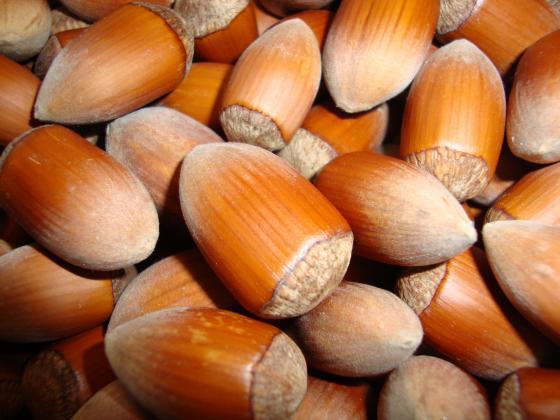 Износът на лешници от Турция намалява