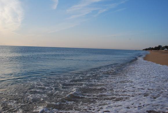 Намаляват случаите на мъртви делфини по българското Черноморие
