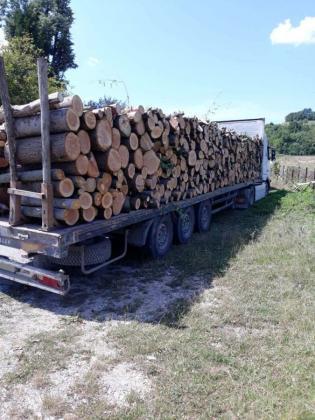 В Сливенско вече крадат дървесината с тирове