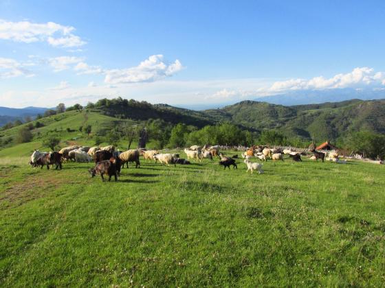 Спестените 27,9 млн. евро от орязаните тавани на директните плащания са насочени към младите фермери