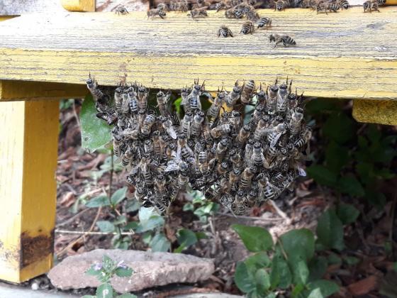 В Бразилия са умрели около 500 милиона пчели през последните три месеца