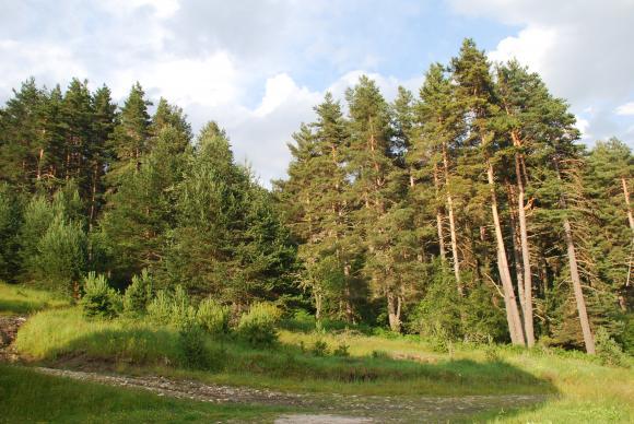 WWF насърчава търсенето на продукти от устойчиво произведена дървесина
