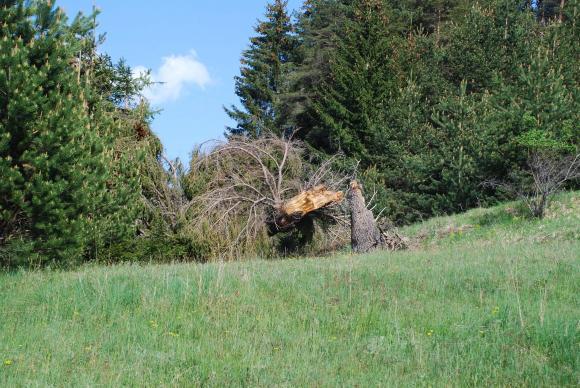 На 12 и 13 септември около Гърмен ще пръскат горите, пчеларите да внимават!