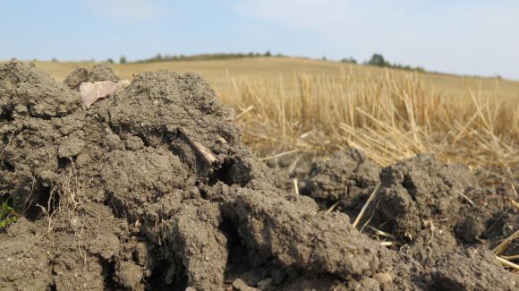 Сеитбата на есенниците в Украйна е пред провал заради сушата