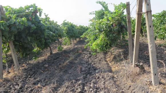 Предстои среща на Красимир Коев с гроздо- и винопроизводители в Силистра