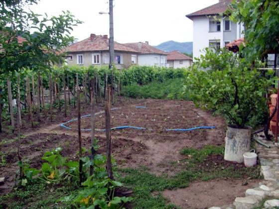 Есенно пръскане на градината срещу болести и вредители