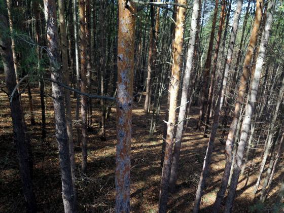 Стартира прием на документи за закупуване на поземлени имоти в горски територии, собственост на физически лица