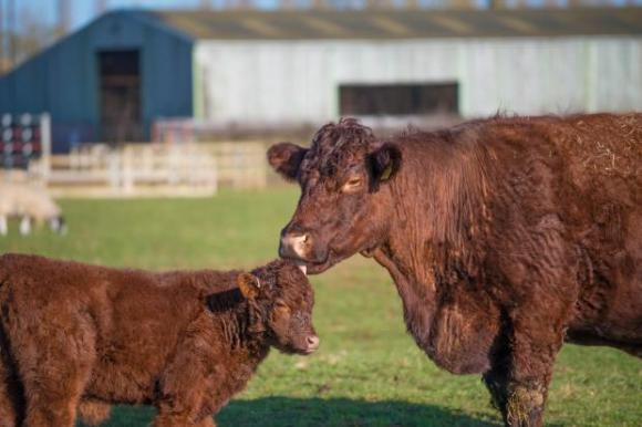 За четвърти път СТЕКСПО 2019 събира елита в месодайното животновъдство в Пловдив