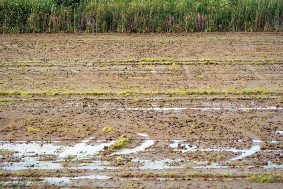 Първият важен за земеделието дъжд през есента се очаква на 4 октомври