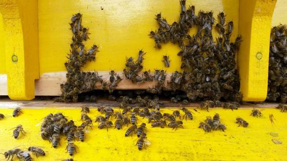 От днес пчеларите кандидатстват за de minimis