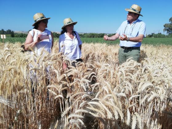 Обмяна на опит между селекционери на зърно от България и Испания
