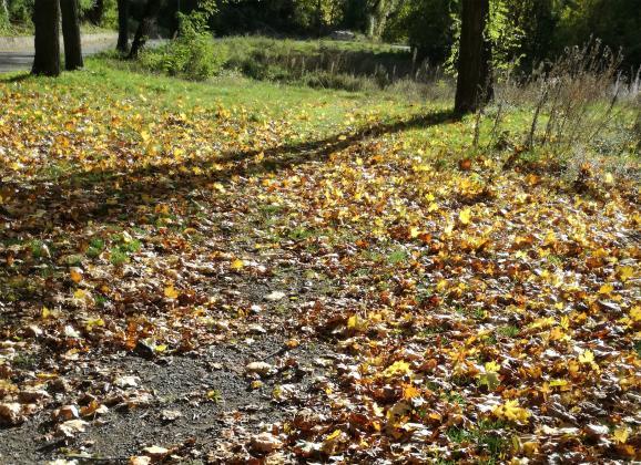 Есенен листопад – няколко идеи какво да правим с опадалите листа
