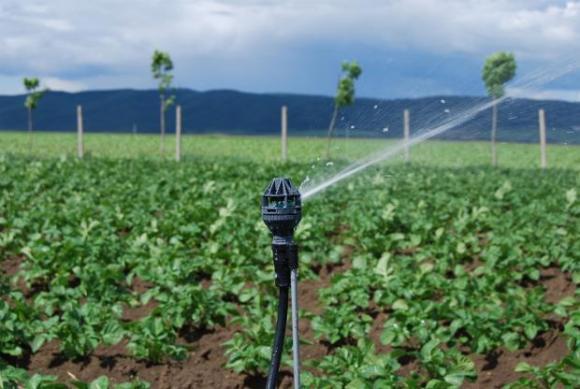 Напояваните 14 на сто от обработваемите земи в Испания осигуряват две трети от продукцията