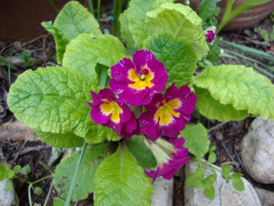 Подходящи цветя за сенчестите места в градината