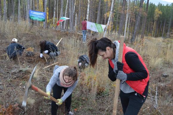 Повече от 200 доброволци се включиха в залесяване на територията на Кюстендил, Радомир и Сливница
