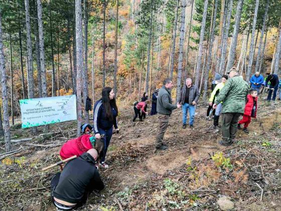 Нови акции по залесяване в Югозападна България