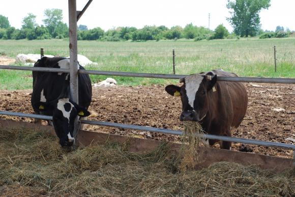 На Никулден животновъдите получават още 80 млн. лева по обвързаната подкрепа