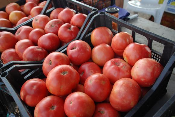 От 2 до 31 януари 2020 г. ще се приемат фактурите за продадени плодове и зеленчуци от тази година