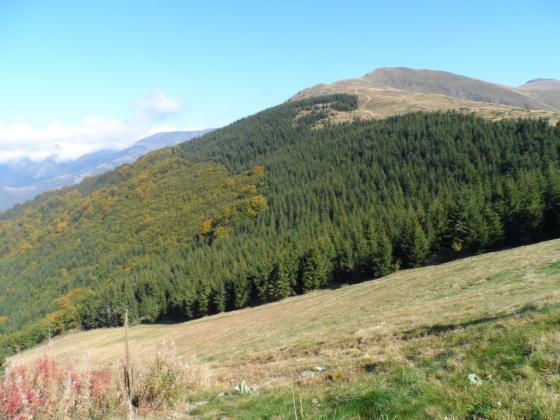 Започват предварителни проверки за горската сертификация в Югозападна България