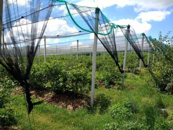 ЕК е дала одобрение помощта за съхранение на плодове и зеленчуци да се вдигне с 18,6 млн. лева