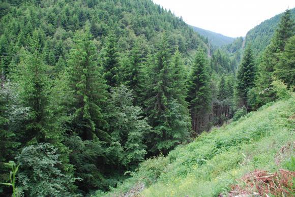 Небивал интерес към продажбата на частни гори на държавата