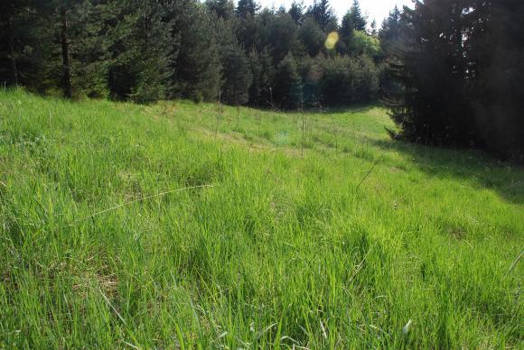 Танева: В края на 2020 г. ще има нов прием за покупка на частни гори от държавата