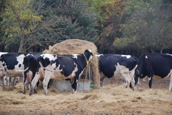 Важни елементи от наръчника за млечното говедовъдство през 2020 г.