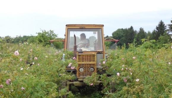 Многофункционална машина за рози на Селскостопанска академия е с първа награда за иновации на АГРА 2020