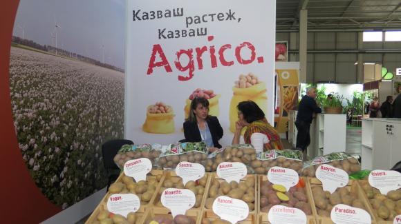 С новите сортове картофи пестите разходи за допълнителната им обработка