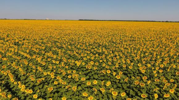 Фермери предлагат заради сеитбата зелените плащания да се преведат по-рано