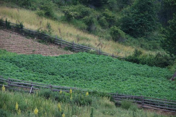 Производителите на плодове и зеленчуци настояват за 20 млн. лв. помощ по де минимис