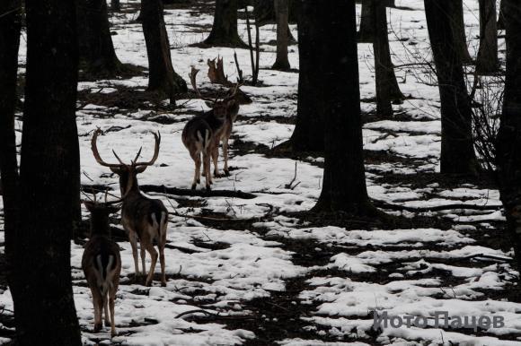 Застреляха 3 благородни елена в Шуменско  навръх Великден