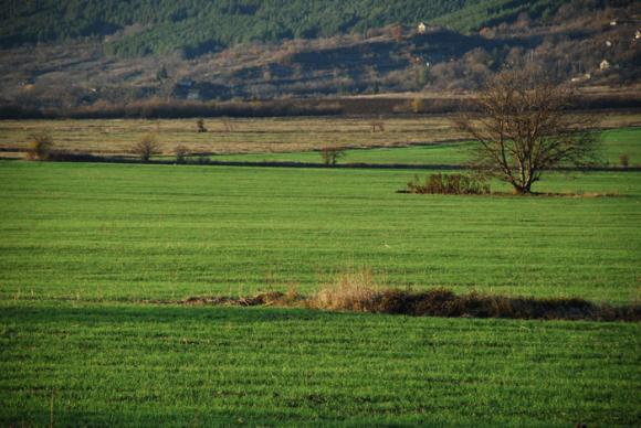 Международният съвет по зърното намали прогнозата за производство на пшеница през 2020/21 г.