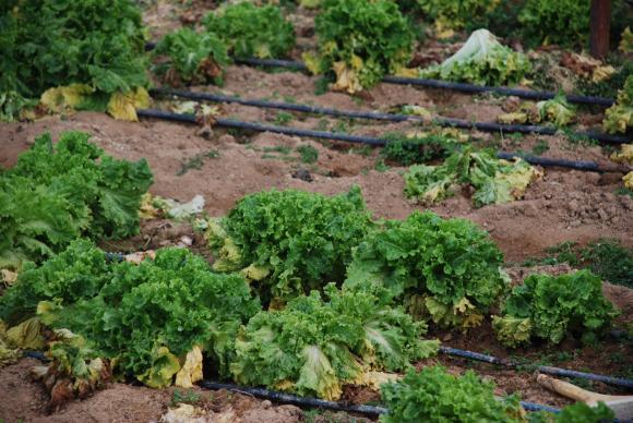 """Фонд """"Земеделие"""" отправя покана към застрахователи, които ще работят с дребни фермери"""