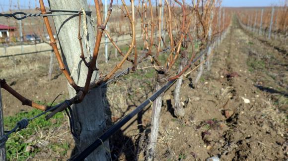 Влязоха в сила промените в Националната програма за подпомагане на лозаро-винарския сектор