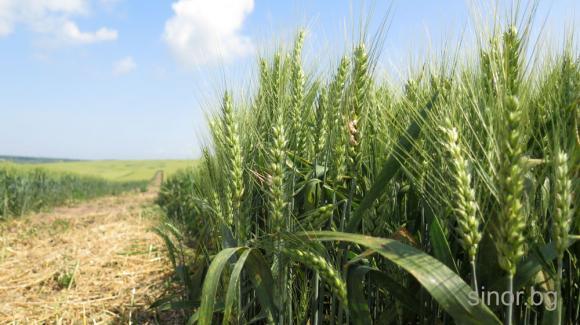 По-високи добиви от зърно в Турция през 2020 г.