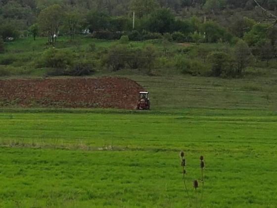 Продавачите на пшеница свалят цените на борсата до 310 лв. за тон