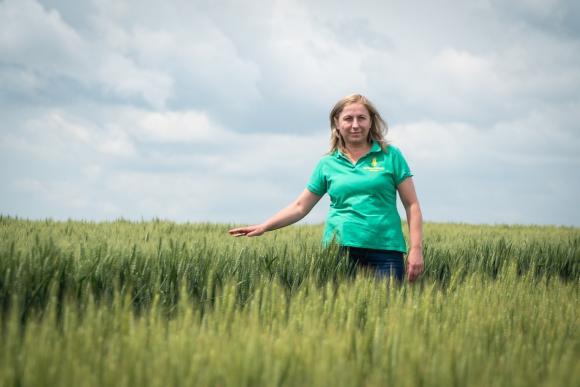 Денят на пшеницата 2020 ще покаже изпитванията на сортове в извънредни климатични условия