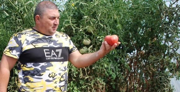 Расте броят на младите фермери в Италия