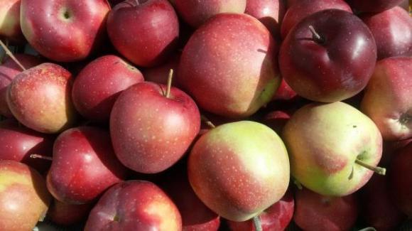 Цените на ябълките в Полша не са били толкова високи от 10 години